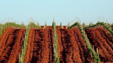 Vinhos da Herdade da Mingorra distinguidos em Portugal e no Brasil