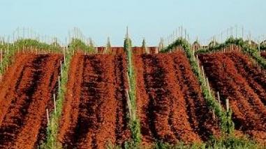 """Beja: Vinhos da Herdade da Mingorra nos """"tops"""" de Portugal e do Brasil"""