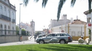 Castro Verde: 10.ª edição dos Jogos Concelhios começa no próximo sábado
