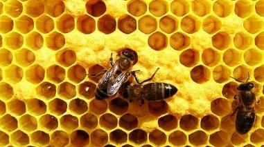 Câmara de Castro Verde promove formação em apicultura e horticultura