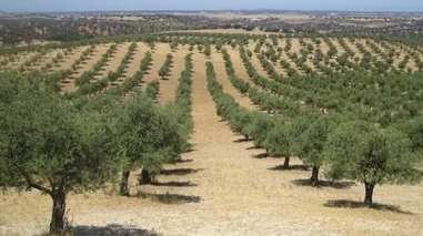 Casa Agrícola Cortez de Lobão investe sete milhões de euros em olival e lagar em Serpa