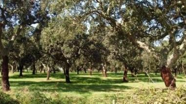 Castro Verde promove programa de voluntariado em defesa da floresta