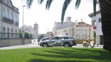 Castro Verde: Assembleia Municipal avalia Plano de Pormenor da Cavandela