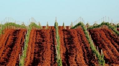 Herdade da Mingorra reforça posição no mercado vinícola nacional