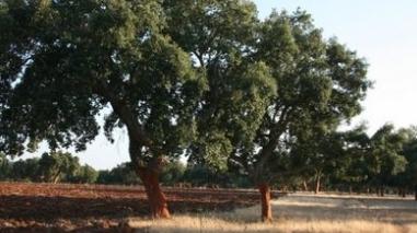 Turismo do Alentejo vai candidatar montado e cante a património mundial em 2012