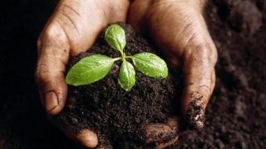 Centro de Educação Ambiental dos Gasparões recebe distinção de mérito