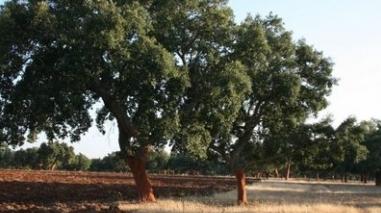 Beja vai receber congresso internacional dedicado ao sobreiro em 2012