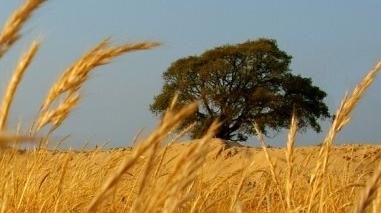 Agricultores do Baixo Alentejo reúnem sexta-feira para avaliar quadro complicado do sector