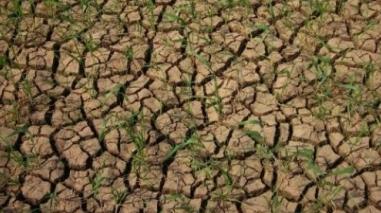 Câmara de Beja pede ao Governo medidas de apoio contra a seca