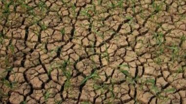 Ministra da Agricultura admite pedido de ajuda à União Europeia devido à seca