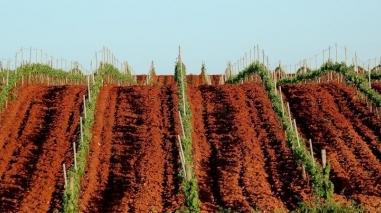 """""""M"""" Fortified Wine é terceiro produto da gama gourmet da Herdade da Mingorra"""