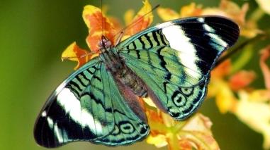 Câmara de Beja apresenta projecto de borboletário para o jardim público