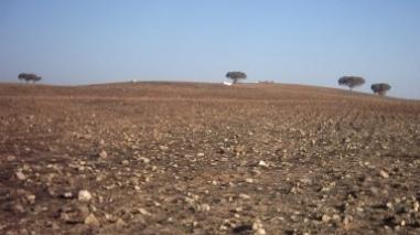 Ministério da Agricultura pede a Bruxelas ajuda contra os efeitos da seca