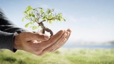 Dia Mundial da Árvore assinalado em Ferreira do Alentejo e em Beja
