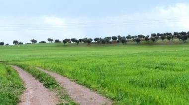 Criação de banco de terras agrada aos agricultores do Baixo Alentejo