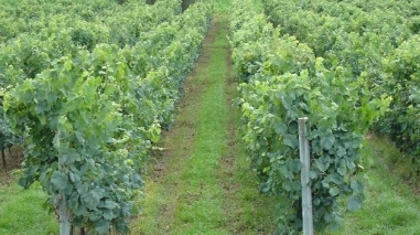 Câmara da Vidigueira promove fórum para empresários do sector vinícola