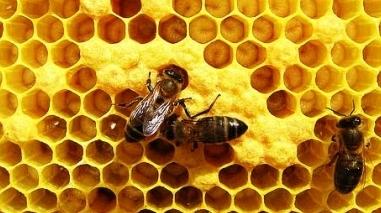 Câmara de Odemira promove acção de formação em apicultura
