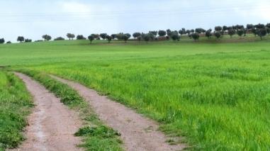 """Dirigentes associativos fazem """"raio X"""" à agricultura do Baixo Alentejo"""