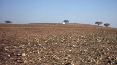 PS questiona Governo sobre medidas contra a seca e falta de apoios ao porco alentejano e bovino mertolengo