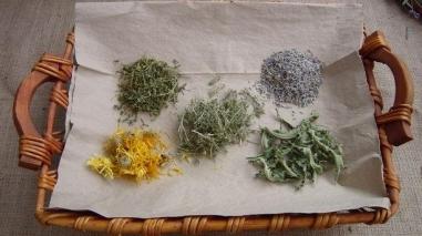 Beja receba primeiro Encontro Ibérico de Plantas Aromáticas e Medicinais