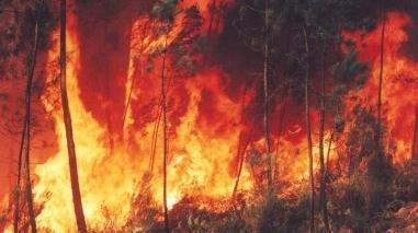 Incêndio devasta área de mato