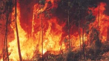 Distrito de Beja em alerta Amarelo até domingo devido a risco de incêndios