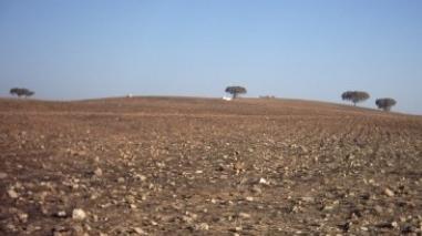 Seca esgota prados e pastagens para gado no Alentejo