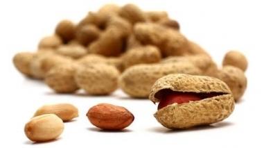 Empresa PepsiCo aposta na plantação de amendoim no Alqueva