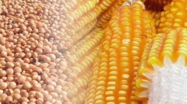 Festival do Milho e do Feijão anima São Teotónio durante o fim-de-semana