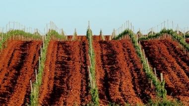 Herdade da Mingorra quer exportar mais vinho em 2012-2013