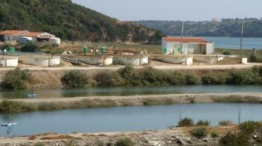 Deputado do PSD defende projecto de aquacultura em Milfontes