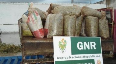 GNR faz nove detenções por furto de azeitona em Pedrógão do Alentejo