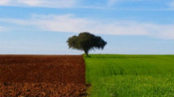 Turismo do Alentejo promove vendas
