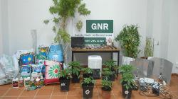 GNR deteve quatro pessoas