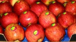 Empresa de fruta fresca investe