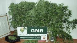 GNR detém suspeitos de