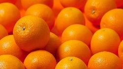 Projecto de citrinos