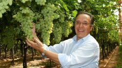 Uvas alentejanas à