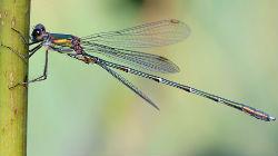 Livro sobre libélulas