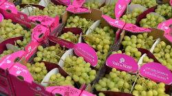 Uvas Vale da Rosa a caminho do Dubai