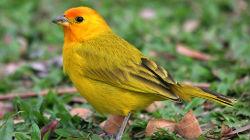 Clube Ornitológico de Castro