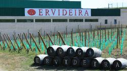 Vinhos Ervideira estão