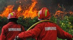 Incêndio florestal extinto