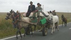 Mediadores ciganos criam