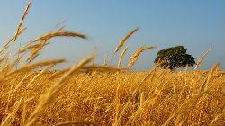 """Ano agrícola """"atípico"""""""
