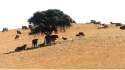 Agricultores de Beja