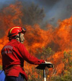 Bombeiros do distrito combatem incêndio de Pedrógão Grande