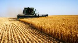Produção de cereais não