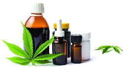 Fábrica de 'cannabis' medicinal em Aljustrel
