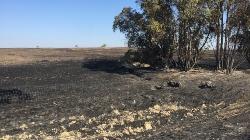 Castro Verde quer verbas do PDR para minimizar estragos do incêndio